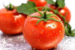 """西红柿""""长生不老""""?水果成精了"""